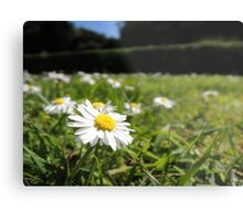 One in a million - Daisy Metal Print