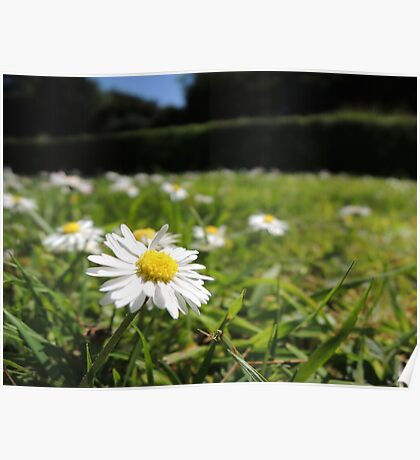 One in a million - Daisy Poster