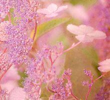 Pink Hydrangea by Dawn Cox
