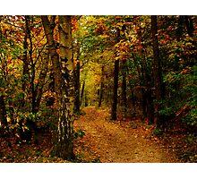 Autumn glow.. Photographic Print