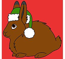 Brown Arctic Hare with Christmas Green Santa Hat Photographic Print