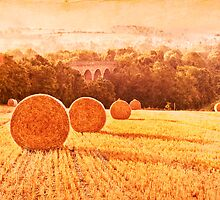 Harvest time by Dawn Cox