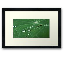 Rain Drops on Leave Framed Print