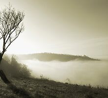 Misty Spring Morning by Dawn Cox