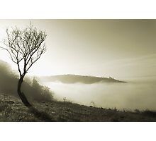 Misty Spring Morning Photographic Print