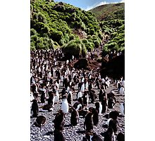 Royal Penguin Highway Photographic Print
