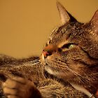 Basil In The Sun by meowiyer