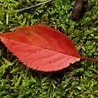 Fallen leaf on moss by John Wright