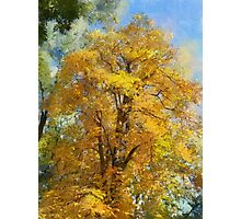 yellow tree Photographic Print