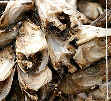Stockfish hanging out to dry by Erwin Winkelman