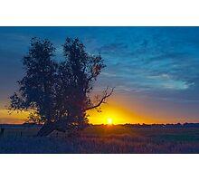 One tree Photographic Print