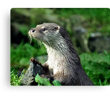 Male Otter Canvas Print