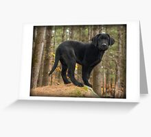 I think she's found us! Greeting Card