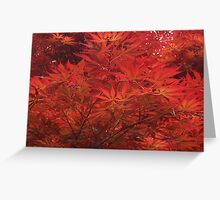 Red leaves in the autumn Greeting Card