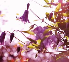 Bells and Bokeh by irishgirl7