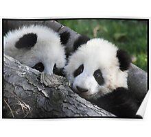 Panda feeding time Poster