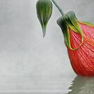 Hibiscus Bud by Elaine  Manley