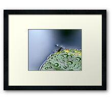 Water Hopper Framed Print