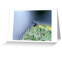 Water Hopper Greeting Card