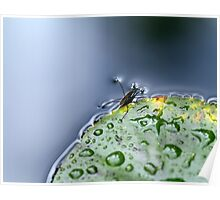 Water Hopper Poster