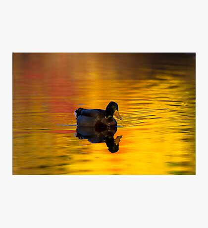 On Golden Waters Photographic Print