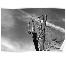 Stark Bare Tree Poster