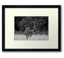 Stag in Richmond Park Framed Print