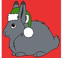 Gray Arctic Hare with Christmas Green Santa Hat Photographic Print