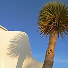 Palm Shadow by avocet