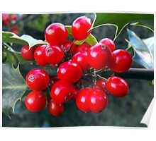 """""""The holly bears a berry ..........."""" Poster"""