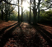 Bed of leaves by copacic