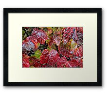 Who Lives On A Web Like This? Framed Print