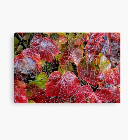 Who Lives On A Web Like This? Canvas Print