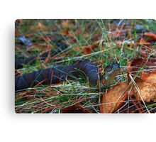 Northern Water Snake Canvas Print
