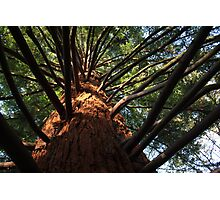 Naked Fern Tree Photographic Print