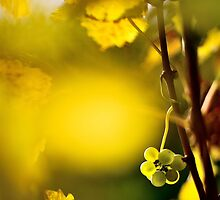 2012 - leftover at the vineyard by moyo