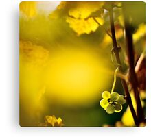 2012 - leftover at the vineyard Canvas Print