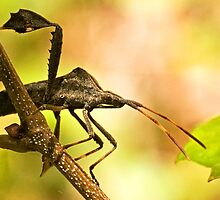 Assassin Bug by Otto Danby II