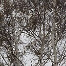 Thick Branches by decorartuk