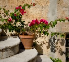Flowerpot on Stairs in Kolcura, Croatia by Gerda Grice