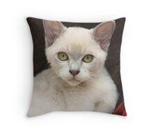 Burmese Kitten Throw Pillow