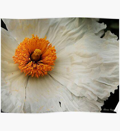 Pretty In White Poster