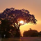 Jacaranda sunrise by PhotosByG