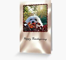 Snowdrop the Maltese Thanksgiving Card Greeting Card