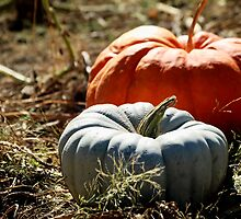Gray and Orange Pumpkins by HeavenOnEarth