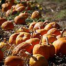 Row of Pumpkins by HeavenOnEarth