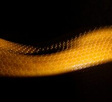 Mid Slither by Bob Larson