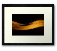 Mid Slither Framed Print