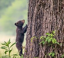 Little Bear Big Tree by Owed To Nature