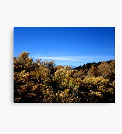 Desert Brush Canvas Print